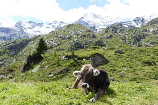 Im Ferienresort Hell im Nordtiroler Ort Fügen kommen Wintersportfreunde voll auf ihre Kosten.